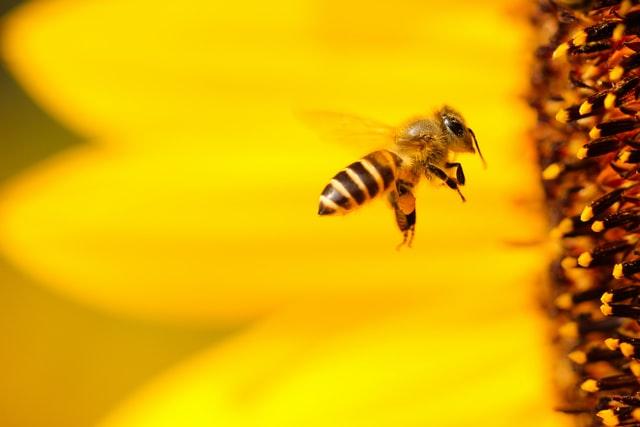 Učni čebelnjak – Az oktató méhkaptár